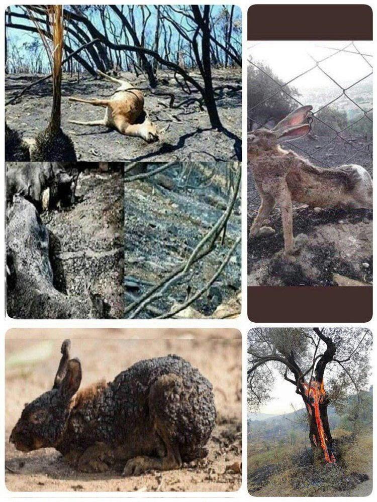 جعلی بودن تصاویر لاشه سوخته حیوانات در آتش سوزی ارسباران